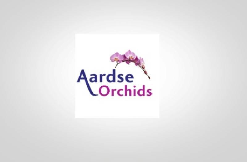 Aardse Orchids